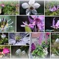 写真: 庭の3月の花(2)pink&white