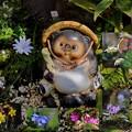 タヌコの庭(2)