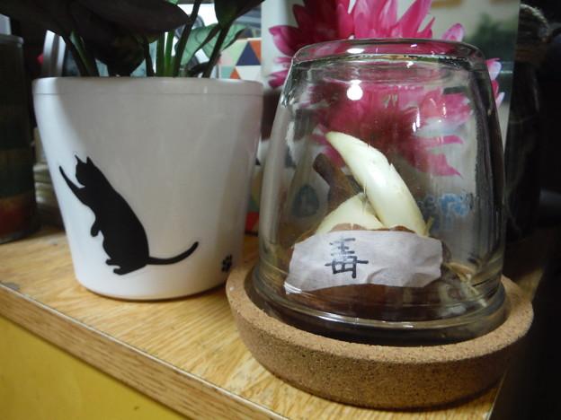 八重咲きコルチカム