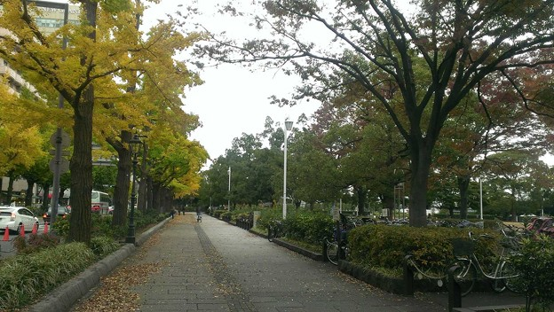 山下公園 横浜マリンタワー付近