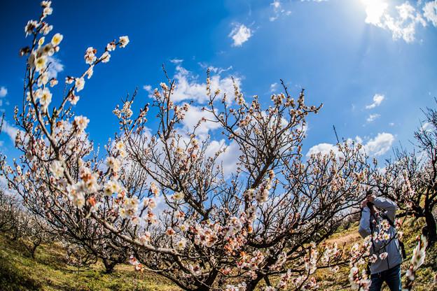 春を見つけに!