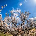 写真: 春を見つけに!