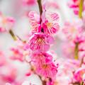 写真: 春ぅ~~!