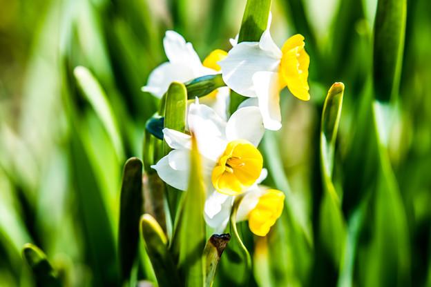 Photos: お花