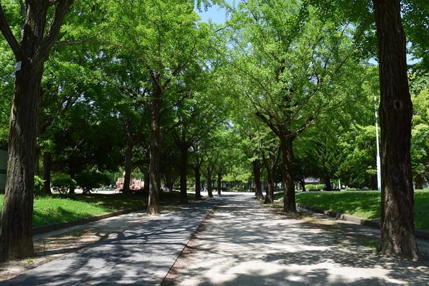 千種公園の景色 (2)