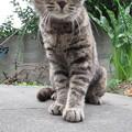 Photos: トラ魅のあんよ。
