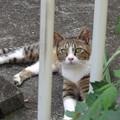 Photos: 新美猫。