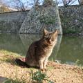 写真: 石垣と猫