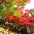 写真: 紅葉3