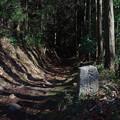 山の辺の道