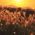Photos: 夕陽とススキ