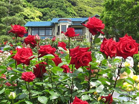 鎌倉文学館のバラ(3)