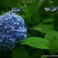 写真: 朝の青