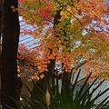 Photos: 紅葉を受ける手