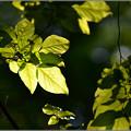 Photos: 森で