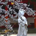 Photos: 花の衣