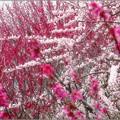 Photos: 咲き乱れて