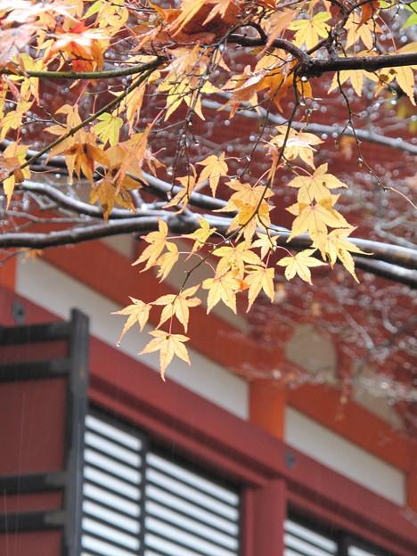 Photos: 談山神社2016秋 見納め