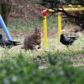 Photos: 猫とカラス 緊張の一瞬