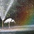Photos: 噴水と虹