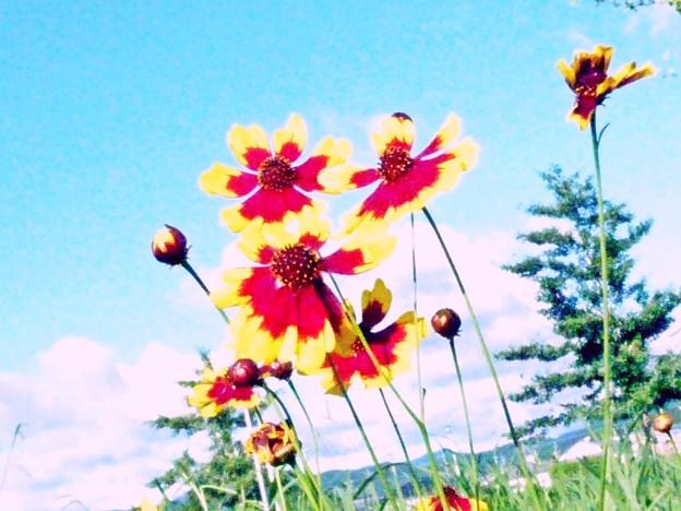 夏空を見上げる花