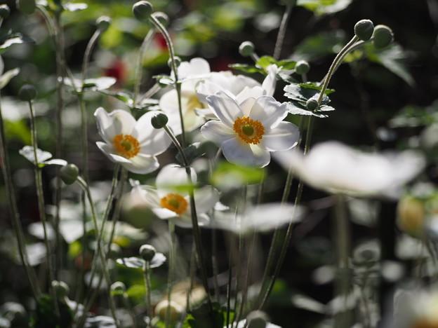 Photos: 花束を君に~♪