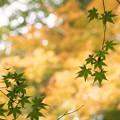 Photos: そして、秋