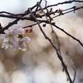 写真: 花 恋し