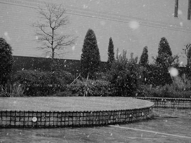 写真: 雪は降る from Kobe