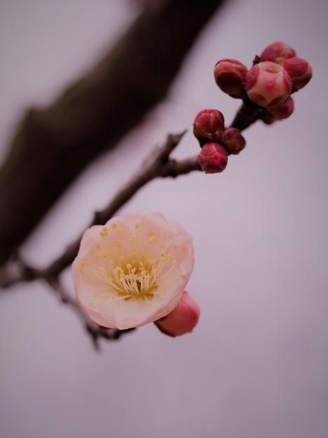 写真: 一輪の春