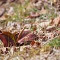 写真: 六甲の浅い春