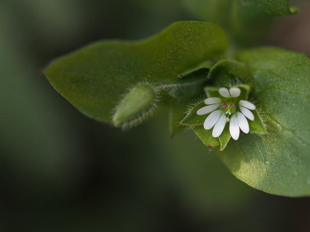 写真: きらりと 野の花