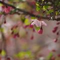 写真: 桃色滴