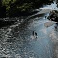 Photos: 川遊び-6212