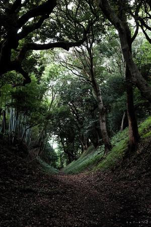 21小田原城_小峯台御鐘ノ台大堀切-1996