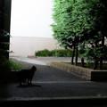 写真: 夜猫-1949