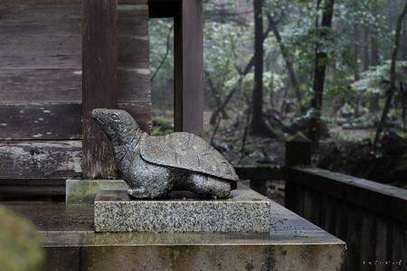 瀧尾神社_03亀-6724