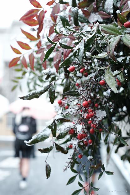 雪の朝_登校-1820