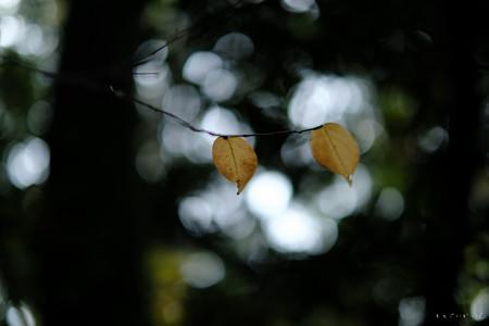 国分寺10_黄葉-1704