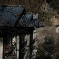 写真: 02柳家-3167