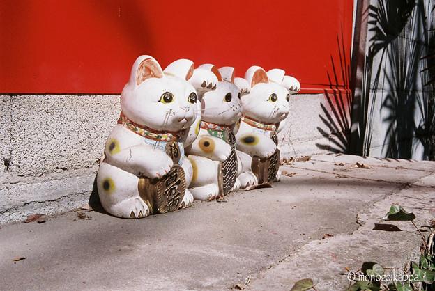08招き猫-010032