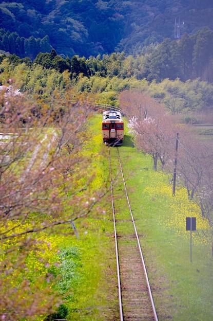 長閑な田舎の風景を走るいすみ鉄道 キハ28。。20160409