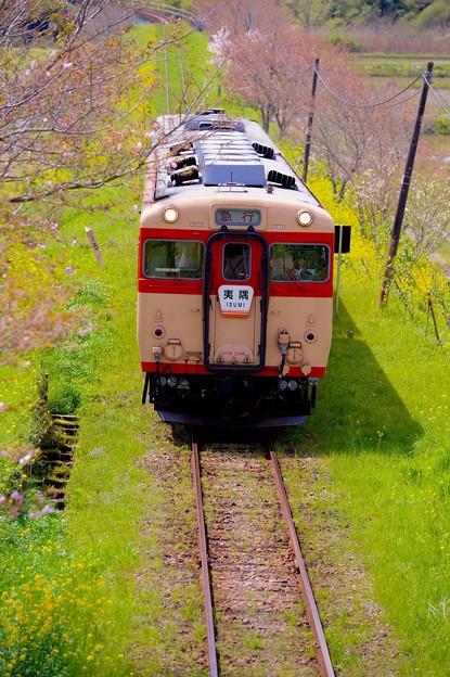 春の田園風景。。いすみ鉄道キハ28。。20160409