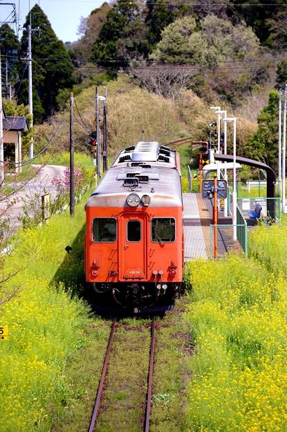 城見ヶ丘駅に停車する臨時急行キハ52。。いすみ鉄道20160409