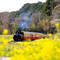 菜の花畑へ。。小湊鉄道トロッコ列車。。20160409