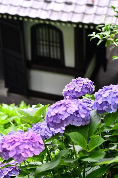 お寺の風情と梅雨時期の紫陽花。。20160624