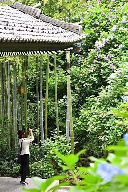 長谷寺の新緑と紫陽花。。青々と竹と。。20160624