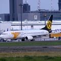 Photos: 成田空港。。さくらの山公園にてMONGOLIAN AIRLINES ボーイング737-800 。。20160626