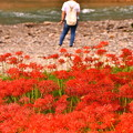 高麗川沿いに咲く曼珠沙華。。巾着田 20160925