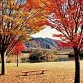 宮ヶ瀬ダム湖畔。。紅葉深まる暖かい日差し。。20161120